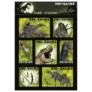 Kép 3/4 - Dinoszauruszok matrica - 11 x 16 cm (NFDN)