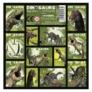 Kép 1/3 - Dinoszauruszok matrica 16 x 16 cm (NZDN)